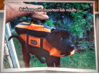 Meme, Thought, and You: Briefcase with important lab results... I stole this meme, i thought you should know