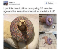Doggo, Dog, and Pillow: BRIELLE  @briellewestwood  Follow  I put this donut pillow on my dog 20 minutes  ago and he loves it and won't let me take it off What a comfy doggo