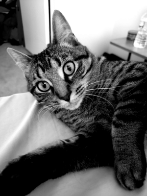 Black, Black and White, and White: Bright-eyed in Black and White