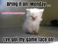 bring it on: Bring it on, Monday  www.facebook.com/NeverTrustASmilingcat  Ove got my game face on!
