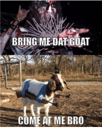The goat will be sacrificing YOUR head tonight Gaahl gaahl gorgoroth metal metalhead metalmeme thrashmetal blackmetal deathmetal hardrock heavymetal groovemetal djent folkmetal powermetal metalgirl metallica ironmaiden behemoth pantera megadeth slayer motorhead blacksabbath dio amonamarth kvlt: BRING ME DAT GOAT  COME AT ME BRO The goat will be sacrificing YOUR head tonight Gaahl gaahl gorgoroth metal metalhead metalmeme thrashmetal blackmetal deathmetal hardrock heavymetal groovemetal djent folkmetal powermetal metalgirl metallica ironmaiden behemoth pantera megadeth slayer motorhead blacksabbath dio amonamarth kvlt