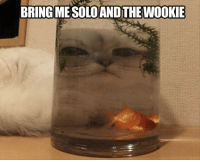Dank, Instagram, and 🤖: BRING MESOLOANDTHE Bring me Solo and the Wookie  My Instagram: welcome2internet