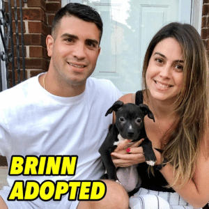 Family, Life, and Love: BRINN  ADOPTED BRINN ADOPTED❤️ Precious and petite Brinn has stolen the hearts of her forever family. We want to wish them endless love and happiness for years to come.  HAPPY LIFE BRINN!❤️ #brinnnybc #adoptdontshop #nybcpuppies #nybcalumni #nybcadopters #nybcpr @ibliz_prez