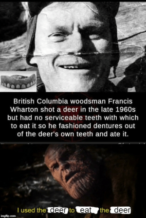 feniczoroark:  Gotta eat so: British Columbia woodsman Francis  Wharton shot a deer in the late 1960s  but had no serviceable teeth with which  to eat it so he fashioned dentures out  of the deer's own teeth and ate it.  T used the deer to eat  the deer  imgflip.com feniczoroark:  Gotta eat so