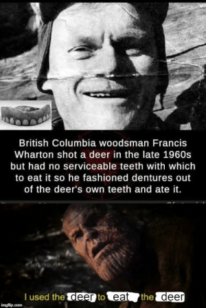 #funny #memes #humor #lol #meme #jokes #funnymemes #fun #lmao #pictures: British Columbia woodsman Francis  Wharton shot a deer in the late 1960s  but had no serviceable teeth with which  to eat it so he fashioned dentures out  of the deer's own teeth and ate it.  T used the deer to eat the deer  imgflip.com #funny #memes #humor #lol #meme #jokes #funnymemes #fun #lmao #pictures