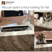 """<p>if it fits i sits via /r/memes <a href=""""http://ift.tt/2pEzz5x"""">http://ift.tt/2pEzz5x</a></p>: Britney Diane  @Britneydortiz  We just spent a hour looking for her.  400  tru  са <p>if it fits i sits via /r/memes <a href=""""http://ift.tt/2pEzz5x"""">http://ift.tt/2pEzz5x</a></p>"""