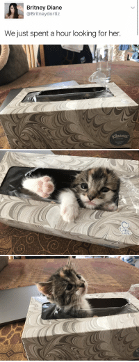 Tumblr, Blog, and Http: Britney Diane  @Britneydortiz  We just spent a hour looking for her.   20  RAND TISsU  trusted  care babyanimalgifs: This is the cutest thing I've ever seen