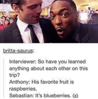 Memes, Marvel, and 🤖: britta-saurus  Interviewer: So have you learned  anything about each other on this  trip?  Anthony: His favorite fruit is  raspberries.  Sebastian It's blueberries. (x) Anthony, Sebastian, and Chris are my bro-t-three anthonymackie sebastianstan chrisevans marvel theavengers