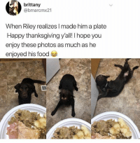 Food, Memes, and Thanksgiving: brittany  @bmarcmx21  When Riley realizes I made him a plate  Happy thanksgiving yall! I hope you  enjoy these photos as much as he  enjoyed his food 😂😂