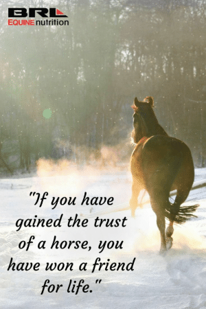 """If you have gained the trust of a horse, you have won a friend for life."" #BRLEquine #equestrian  brlequine.com: BRL  EQUINE nutrition  If you have  gained the trust  of a horse, you  have won a friend  for life."" ""If you have gained the trust of a horse, you have won a friend for life."" #BRLEquine #equestrian  brlequine.com"