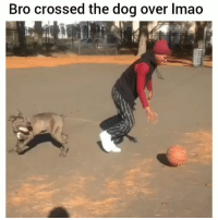 Put in work lol: Bro crossed the dog over lmao Put in work lol