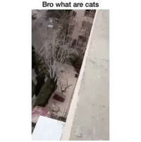 Cats, Fucking, and Memes: Bro what are cats Did that fucking thing just walk away😳👀wtf💀😂 Tag a friend Follow us @laugh.r.us