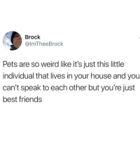 Friends, Weird, and Brock: Brock  @lmTheeBrock  Pets are so weird like it's just this little  individual that lives in your house and you  can't speak to each other but you're just  best friends