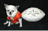 Denver Broncos, Dogs, and Memes: BRONCOS  NATIONAL  AMERICAN  FOOTBALL  CONFERENCE  Wilson. Set your alarms!  The Believe Benefit Auction is TOMORROW night from 6:00-9:30pm MDT.  There are SO many great items, ranging in value from $33 - $2,500 and many are available for shipping.  All proceeds will help rescue and rehabilitate puppy mill dogs.  Be sure to check out the catalog and register early.  There's a lot to look at, including this Denver Broncos Super Bowl Team autographed football that kept rolling toward me!  https://biddingforgood.com/nmdr or mobile https://bforg.com/nmdr