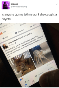 Comment 1: brooke  @brookeondayog  is anyone gonna tell my aunt she caught a  coyote   ive  6.9K  820 Coml  1 Like  Comment  → Share  Gina Mckee added 2 new photos.  8 mins .  Found dog for awhile now. I've been seeing him  walking around and I decided to catch him. I think he  was abused cause he is aggressive and tried to bite  me  3 Comments  → Share  Comment  1 Like  s Feed  Requests