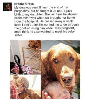 May his sweet little soul rest in peace. ❤️ via /r/wholesomememes http://bit.ly/2Fr3M0S: Brooke Gross  My dog was very ill near the end of my  pregnancy, but he fought it up until I gave  birth to my daughter. The last time he showed  excitement was when we brought her home  from the hospital. He passed away a week  later. I don't think he wanted me to go through  the grief of losing him while I was pregnant,  and I think he also wanted to meet his baby  sister. May his sweet little soul rest in peace. ❤️ via /r/wholesomememes http://bit.ly/2Fr3M0S