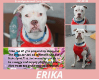 A Dream, Being Alone, and Apparently: Brooklyn Animal Care Center  ID# 44189  Erika can sit, give pav and lay down and  she drops her ball on command Sheisa  little shy at first, but warms up quickly to  be a waggy and happily playful girl Erika  likes treats too and is very housebrokeh  ERIKA TO BE KILLED - 10/22/2018   She arrived at the shelter as a stray, a mystery girl, a beautiful girl, snow white like something out of a fairy tale, and as sweet as any princess could be. The intake staff were instantly smitten with ERIKA. Super friendly, outgoing and so loving, she made the rounds giving kisses. She was also quiet, sitting patiently for them to do their paperwork, happy to be in company. Who knows what she had gone through, where she came from, where she had been. What had she seen before she got to the care center? We just know that for that initial meeting she was herself….she was a dream pup who was open to making friends and being loved. Fast forward to today and she has had a taste of the horror that is the shelter system. The lunging, barking dogs, the small kennel in which she spends most of her 24 hours of the day – only getting a walk perhaps for 15 minutes and then back to prison. She sits in that kennel and she wonders why all this is happening to her. She thought that she was finally going to be able to put her trauma of being lost behind her, only to then be caged. There is no doubt in our minds that Erika is a wonderful girl. She is just scared at the shelter, freaked out, and she needs the comfort and safety of a family environment, a place where she can decompress, rest and then once again open her heart to love. She will need an experienced foster or adopter who can allow her the time she needs to recover, and who will show her, with patience and guidance and love, that there is a happy ever after for her at the end of this long journey. Will it be you? PRIVATE MESSAGE our page or email us at MustLoveDogsNYC@gmail.com if you can foster or adop
