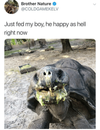 This dude's wholesome animal approach is one of the best things on twitter: Brother Nature  @COLDGAMEKELV  Just fed my boy, he happy as hell  right now This dude's wholesome animal approach is one of the best things on twitter