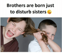 Disturbed, Sisters, and Brothers: Brothers are born just  to disturb sisters