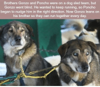 https://t.co/0skcDShjvC: Brothers Gonzo and Poncho were on a dog sled team, but  Gonzo went blind. He wanted to keep running, so Poncho  began to nudge him in the right direction. Now Gonzo leans on  his brother so they can run together every day. https://t.co/0skcDShjvC