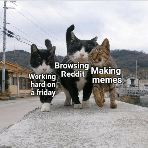 Cats, Friday, and Memes: Browsing  Working Reddit Making  hard on  a friday  memes  imgilp.com This investment ain't for female cats! Invest to make your balance purr!
