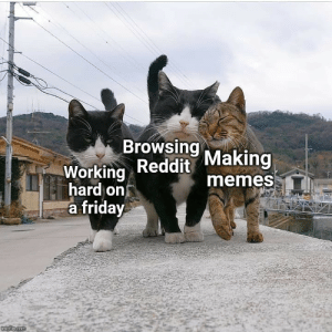 Friday, Memes, and Reddit: Browsing  Working Reddit Making  hard on  a friday  memes  imgilp.com More of the best memes at http://mountainmemes.tumblr.com