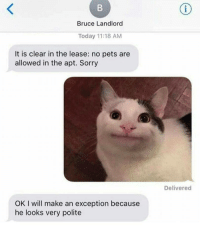 "Memes, Sorry, and Animal: Bruce Landlord  Today 11:18 AM  It is clear in the lease: no pets are  allowed in the apt. Sorry  Delivered  OK I will make an exception because  he looks very polite <p>My spirit animal… via /r/memes <a href=""https://ift.tt/2lV0zMN"">https://ift.tt/2lV0zMN</a></p>"