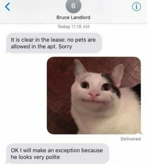 Dank, Memes, and Sorry: Bruce Landlord  Today 11:18 AM  It is clear in the lease: no pets are  allowed in the apt. Sorry  Delivered  OK I will make an exception because  he looks very polite My spirit animal by NickMcMuffins FOLLOW HERE 4 MORE MEMES.