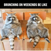 9gag, Be Like, and Memes: BRUNCHING ON WEEKENDS BE LIKE  racoonamatata busan IG Tag someone to have breakfast in bed with you 📹 @racoonamatata_busan raccoon cafe 9gag
