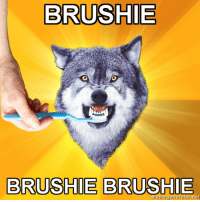 Advice Dog: BRUSHIE  BRUSHIE BRUSHIE  Meger  or net
