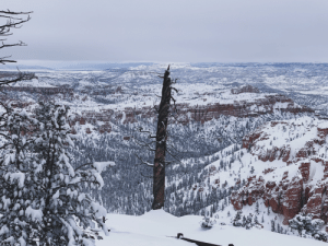 Bryce Canyon after a fresh snow: Bryce Canyon after a fresh snow