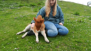 Love, Tumblr, and Blog: brygarth:Kelpie has this new found love for throwing himself onto your lap