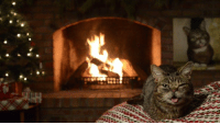 BUB's new 2016 Yule Log Video is ready! Pop it onto your wide screen and enjoy your very own BUB in your very own home.: BUB's new 2016 Yule Log Video is ready! Pop it onto your wide screen and enjoy your very own BUB in your very own home.