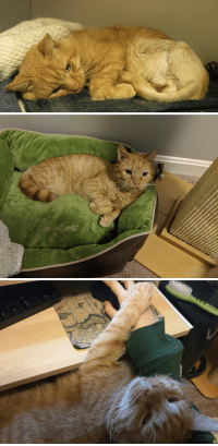 Cat, Three, and  Before and After: BuBu, three legged cat, before and after rescue