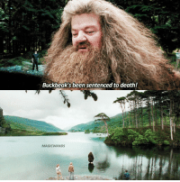 Hagrid or Dumbledore? - Credit @MAGICWANDS lol I'm such a lazy shit I haven't made any edits 🙄🙄 harrypotter hp jkrowling hogwarts: Buckbeak's been sentenced to death!  MAGIC WANDS Hagrid or Dumbledore? - Credit @MAGICWANDS lol I'm such a lazy shit I haven't made any edits 🙄🙄 harrypotter hp jkrowling hogwarts