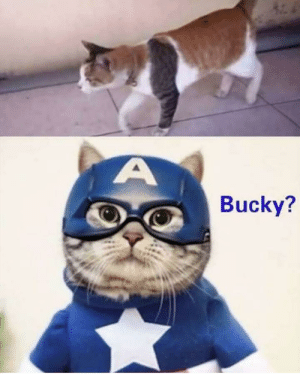 Bucky is that you: Bucky is that you