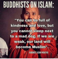 """mad dogs: BUDDHISTS ON ISLAM  """"You can be full of  kindness and love, but  you cannot sleep next  to a mad dog. If we are  weak, our land will  become Muslim  BUDDHIST ASHIN MIRATHU"""