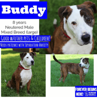 Children, Dogs, and Memes: Buddy  8 years  Neutered Male  Mixed Breed (large)  GOOD W/OTHER PETS&CHILDREN  NEEDS PATIENCE WITH SEPARATION ANXIETY  FOREVER BEGINS  SOCIETY  MIDLAND COUNTY All dogs/puppies in our shelter can be viewed here.  Any dog not being held as a stray is available for immediate, same-day adoption! Adoption applications are reviewed on site. Please share our dogs and help get them out of the shelter as quickly as possible!  **PLEASE NOTE**  Placing an application on a dog featured in this album does NOT hold the dog for you.  All available dogs are available to be met and adopted same day if already altered.  If not altered, the dog can be met and paid for in order to hold the dog for you.  Thank you for your understanding!