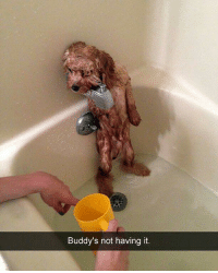 buddys: Buddy's not having it