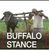 Memes, Taken, and Lost: BUFFALO  STANCE 23 JUN: A farmer in the northern Indian state of Uttar Pradesh – too poor to afford two buffalo – has taken extreme measures to plough his fields, by tying himself to the one animal he does have. Sitaram lost the fingers on his right hand, and says he does not have a national identity card that would enable him to get government help. But the government says it is assisting him. India Farmer Farmers Buffalo Agriculture Poverty BBCShorts BBCNews @BBCNews