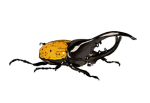 bug-doodles:  bug-doodles: Funky little hercules beetle (Dynastes hercules) Happy Pride! AHAG (all hercules beetles are gay) : bug-doodles:  bug-doodles: Funky little hercules beetle (Dynastes hercules) Happy Pride! AHAG (all hercules beetles are gay)