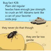 Crush, Dank, and Pop: Bug fact #28:  Plain old regular  beetles have enough jaw strength  to crush an M1 Abrams tank like  a can of your favorite  soda pop  they never do that though  they are far too  gentle wow