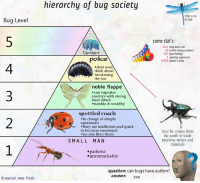 Fresh, Meme, and Memes: Bug Level  e special meme fresh  hierarchy of bug society  this one  is me  Some stat's:  3563 bugs died so far  68 horrfic mining accidents  embert  407 good feelings  3 uprisings suppressed  olice  10793  buzzes n chips  .dont even  think about  breakening  the law  noble flappe  can vaporise  enemys with strong  laser attack  .nimble & wealthy  spottled roach  in charge of simple  operations  .they are inefficient and quick  to become emotional  here he comes from  no one likes them  the south to trade  precious stones and  SMALL  MAN  minerals  .pathetic  .unremarkable  question: can bugs have autism?  answer: yes