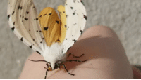 bugkeeping: shes flapping too fast! my camera cant keep up!: bugkeeping: shes flapping too fast! my camera cant keep up!