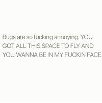 Fucking, Memes, and Space: Bugs are so fucking annoying. YOU  GOT ALL THIS SPACE TO FLY AND  YOU WANNA BE IN MY FUCKIN FACE Buzz off 🐝🖕🏼 Follow @thesassbible @thesassbible @thesassbible @thesassbible
