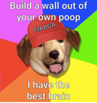 Poop, Best, and Brain: Build a wall out of  your own poop  GA  MADGA  I have the  best brain