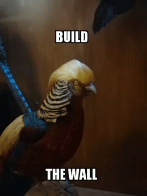 build-the-wall: BUILD  THE WALL