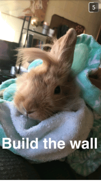 /r/aww doesn't like my bunny picture and said to post it to /r/lolcats...: Build the wall /r/aww doesn't like my bunny picture and said to post it to /r/lolcats...