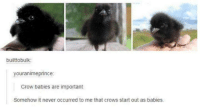Humans of Tumblr, Never, and Crow: builttobulk:  youranimeprince:  Crow babies are important  Somehow it never occurred to me that crows start out as babies.