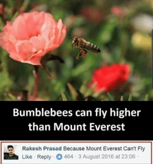 Bumblebee flying higher than Mount Everest: Bumblebees can fly higher  than Mount Everest  Rakesh Prasad Because Mount Everest Can't Fly  Like · Reply  464 3 August 2016 at 23:06· Bumblebee flying higher than Mount Everest